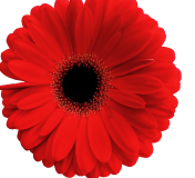Bouquet rond composition florale